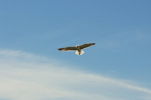 Gratis arkivbilde med fly, himmel, måke