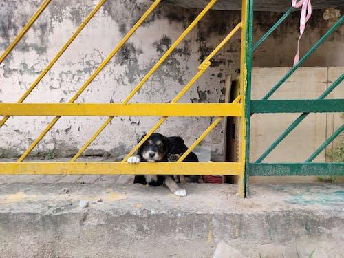 Ilmainen kuvapankkikuva tunnisteilla eläin, koira, koiranpentu, pentu