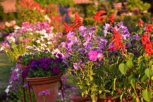 紅色的花朵, 美丽的花 的 免费素材图片