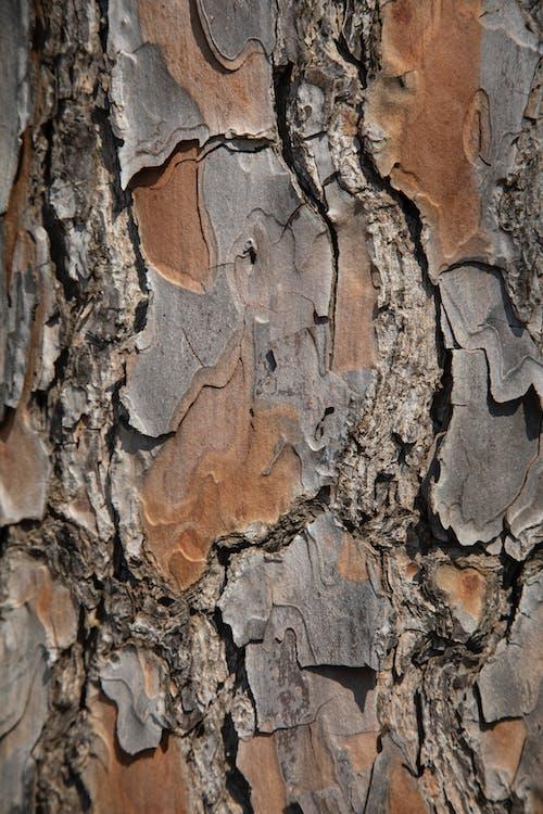 Kostnadsfri bild av abstrakt, bakgrund, bark, brun