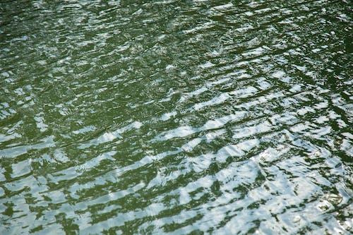 Kostnadsfri bild av bakgrund, flod, grön, hav