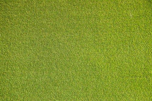 Darmowe zdjęcie z galerii z abstrakcyjny, dywan, flora, gleba