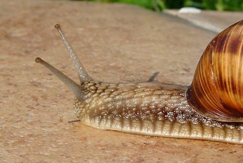 끈적끈적한, 달팽이, 매크로, 민달팽이의 무료 스톡 사진