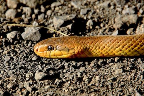 Základová fotografie zdarma na téma divočina, had, mletý, příroda