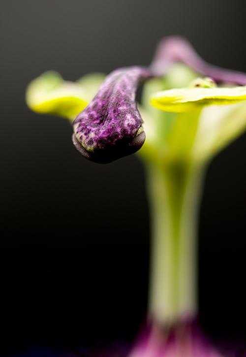 açık hava, ayrıntı, Bahçe, bitki içeren Ücretsiz stok fotoğraf