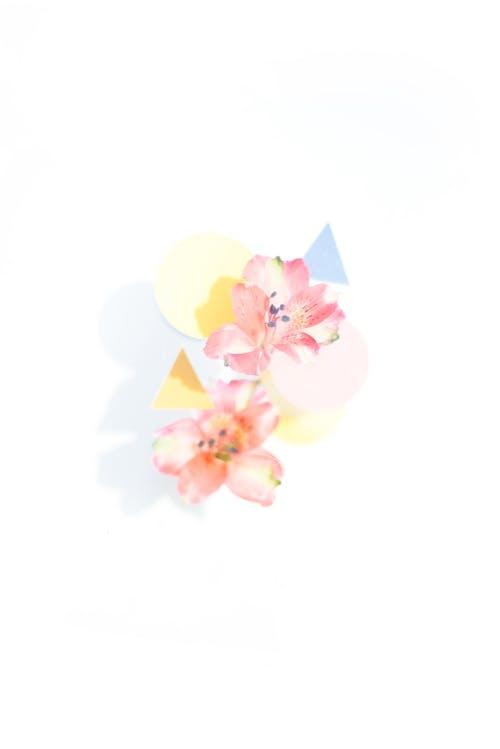 Kostnadsfri bild av abstrakt, bakgrund, blad