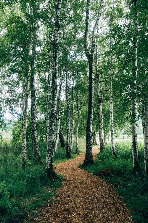 Kostenloses Stock Foto zu bäume, feldweg, fußweg