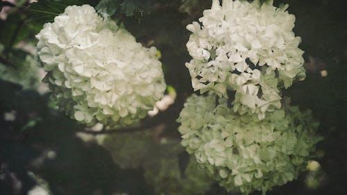 Foto d'estoc gratuïta de arbres, flor, flora, florir