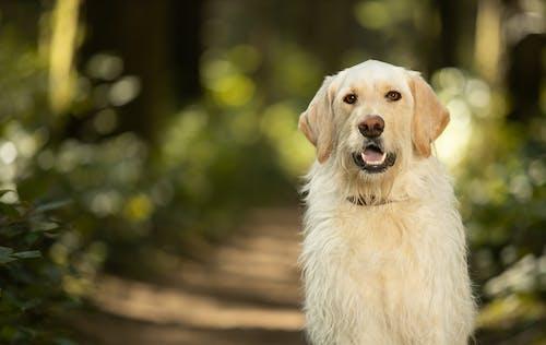 Free stock photo of dog, nature, outside, pet
