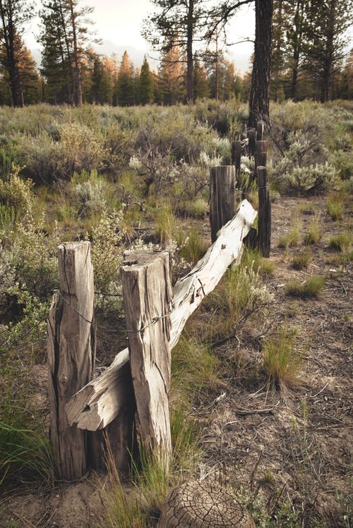 Free stock photo of boundries, fence, forest, high desert