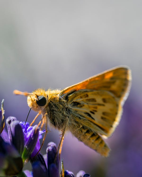 Close-Up Photo of Yellow Butterfly Perched on Purple Flower