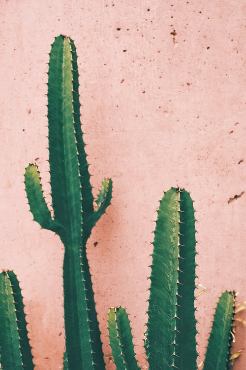 Green Cactus Plant Against Pink Wall