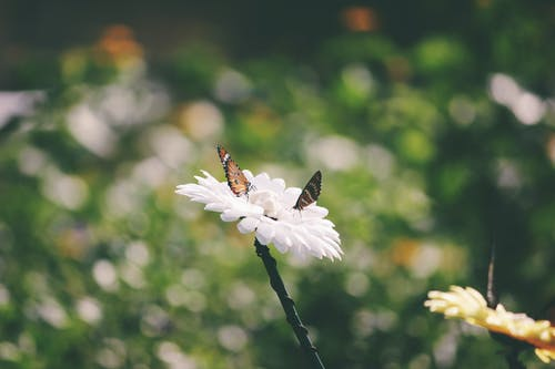 Free stock photo of artificial flowers, beautiful flower, brown butterfly