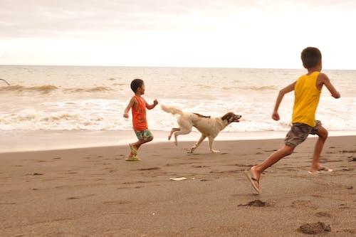 Free stock photo of beach, children playing, dog playing