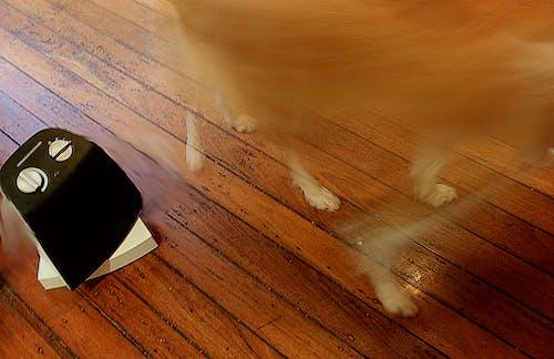 Free stock photo of dog, fan, fur, vanish