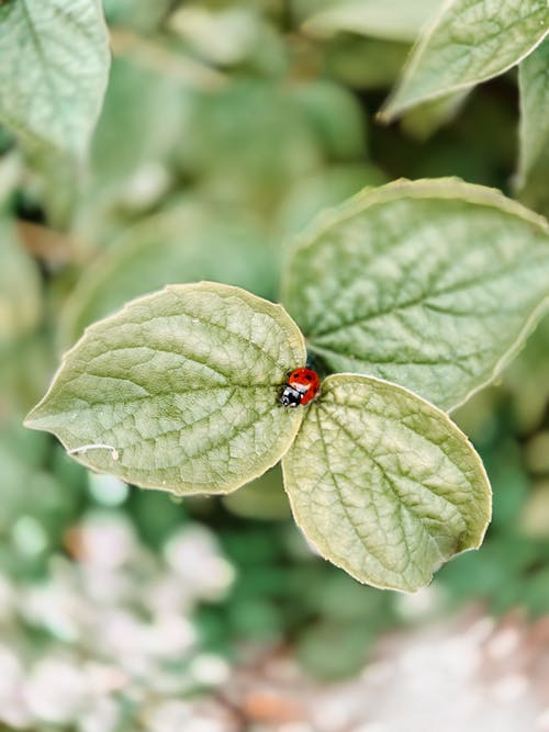 Ladybug sitting on green leaf