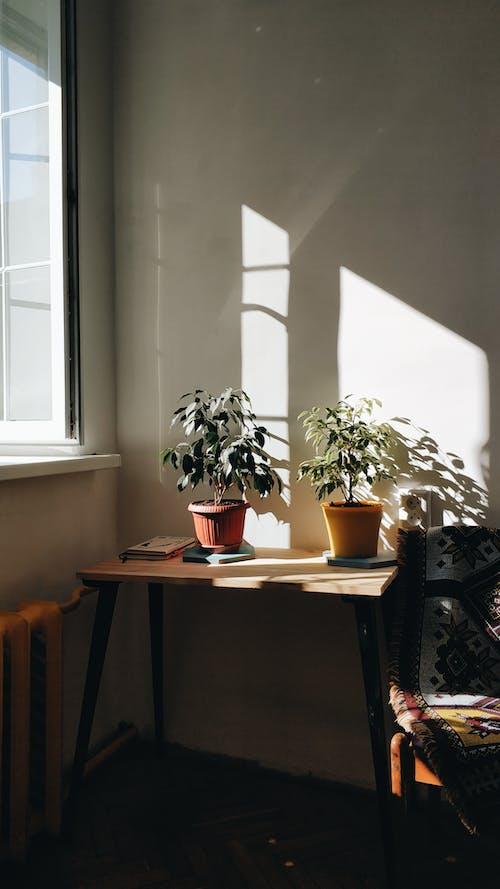 Fresh green plants growing in pots placed on wooden table in dark room near window in sunlight