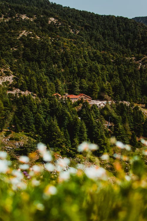 Free stock photo of artwork, green mountains, landscape photography, mountains view