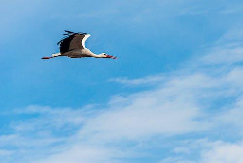 Free stock photo of Aviacion, espíritu viajero, volando