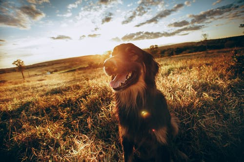 Cute dog standing on grassy meadow