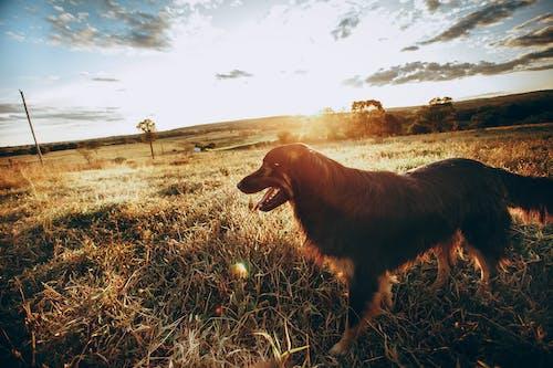 休息, 側面圖, 動物 的 免费素材图片