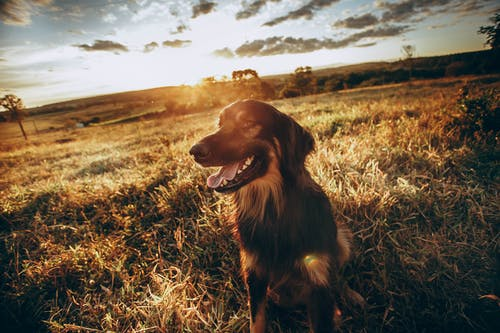 光, 光線, 動物 的 免费素材图片