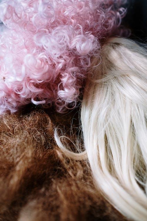 假髮, 劇院, 化裝舞會 的 免費圖庫相片