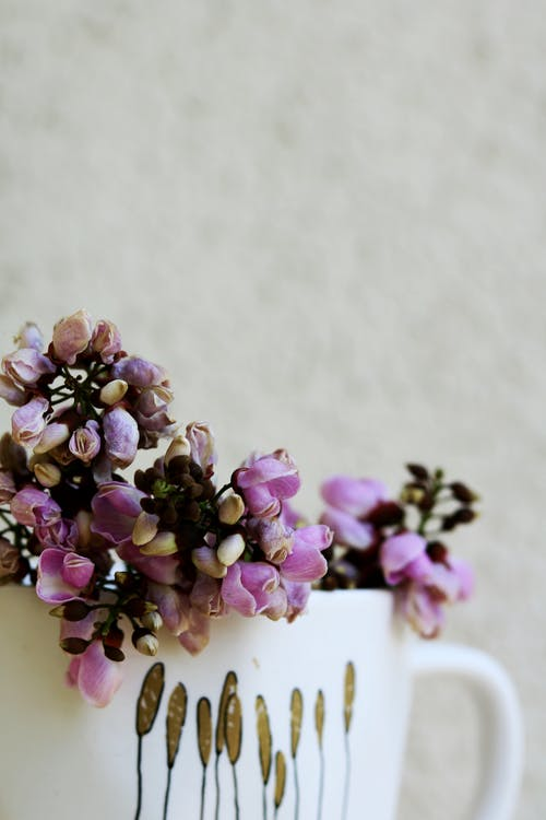Delicate potted blooming flower at home