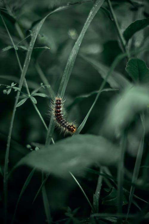 Kostenloses Stock Foto zu insekt, nahansicht, raupe
