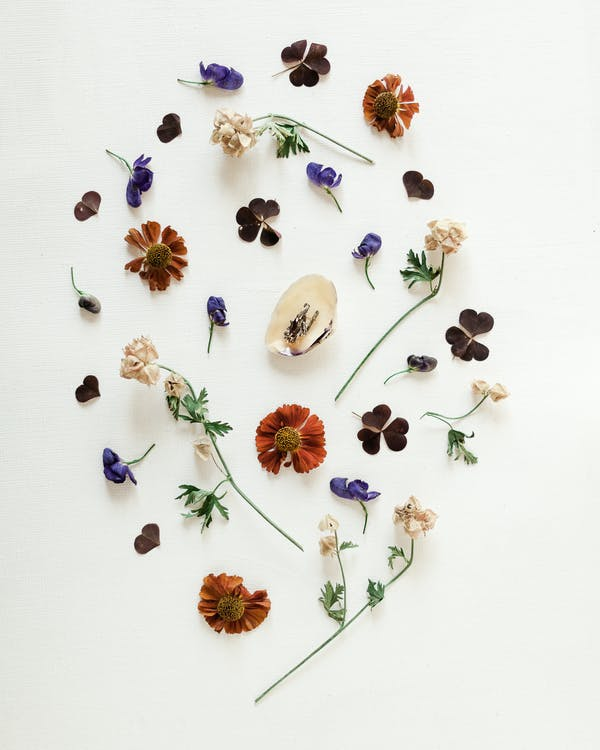 Top view of small delicate dry flowers on long thin stems with dark green leaves arranged on white background