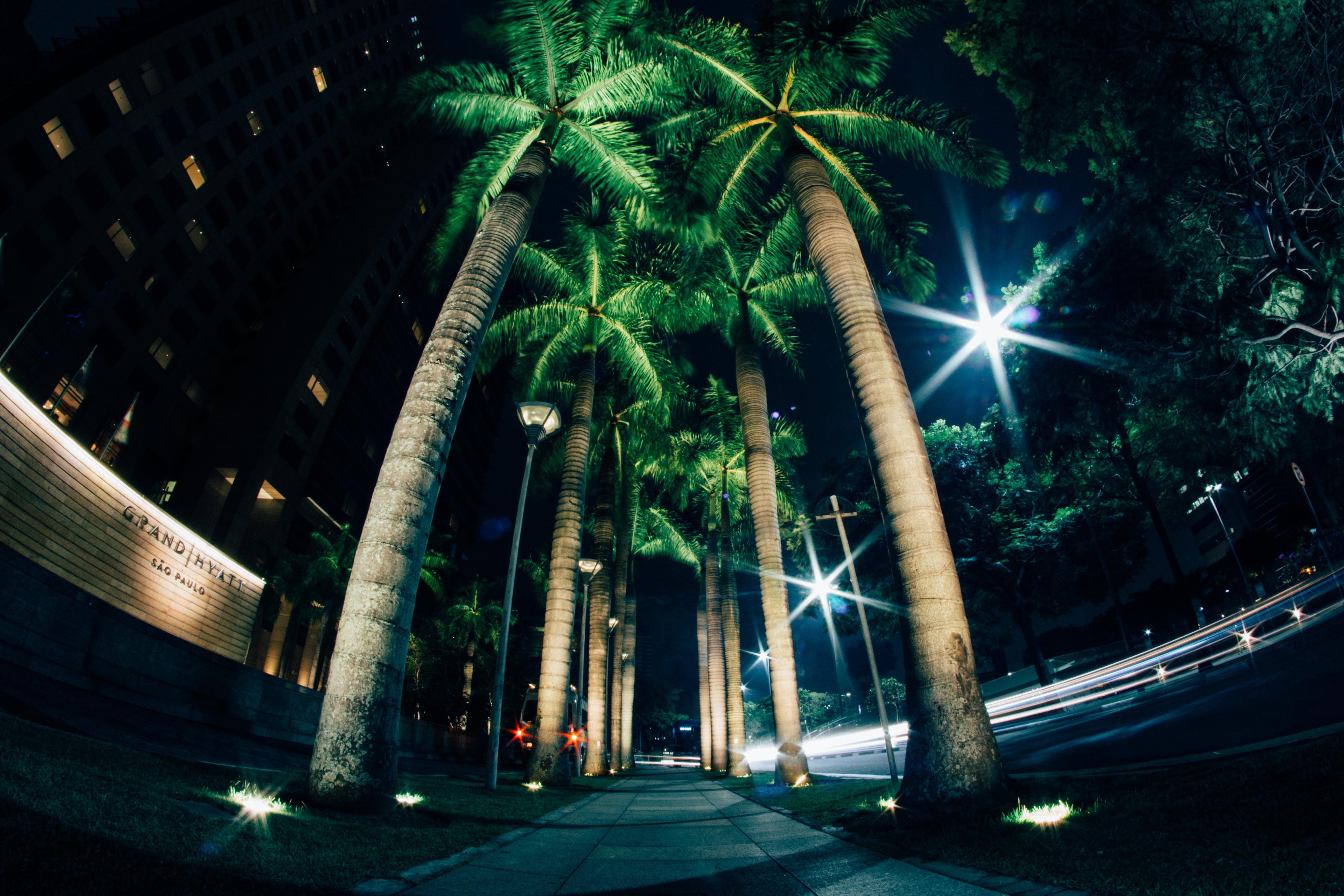 Foto stok gratis cahaya, malam, pepohonan palem, telapak tangan