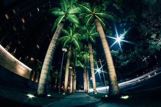 Kostenloses Stock Foto zu beleuchtung, nacht, bürgersteig, palmen