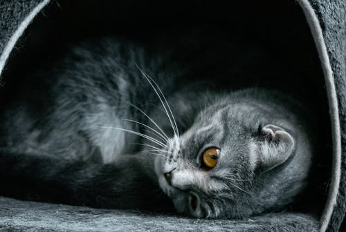 Free stock photo of animals, animals and pets, cat