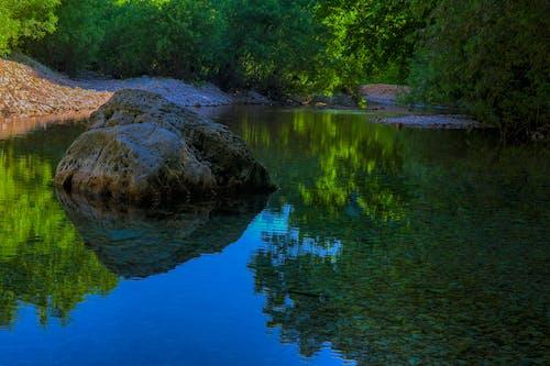 강, 개울, 관목의 무료 스톡 사진