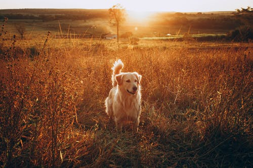 Fotos de stock gratuitas de al aire libre, amanecer, animal