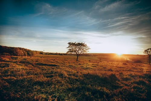 Spectacular scenery of grassy field and rare trees and sun below horizon at countryside