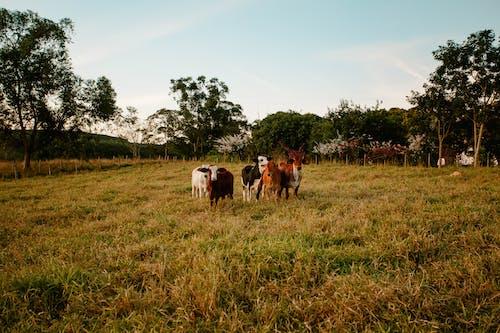 Photos gratuites de agriculture, animaux, animaux de ferme