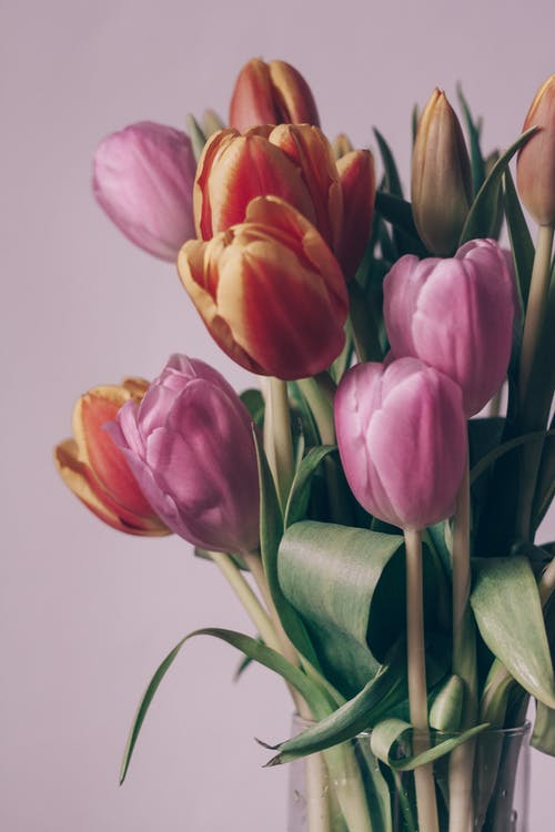 Bunch of gentle assorted tulips in vase