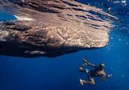 Man in Black Wet Suit Diving on Blue Water