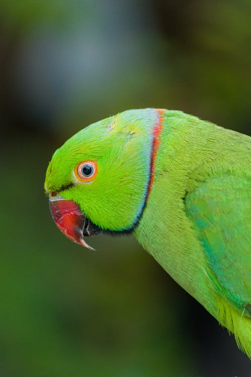 Green and Red Bird in Close Up Photography