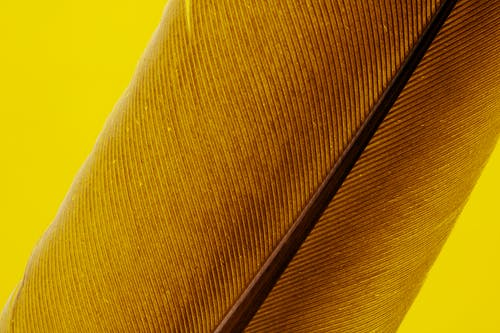 Yellow Textile With Brown Feather