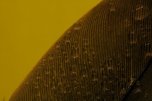 Black and Yellow Round Textile