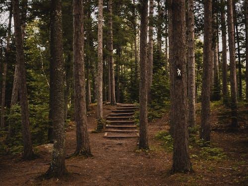 Gratis stockfoto met bodem, bomen, Bos, bossen