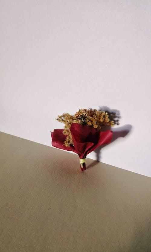 คลังภาพถ่ายฟรี ของ กระดาษ, กลิ่นหอม, ก้านดอก, การตกแต่ง