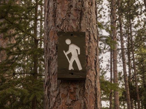 Ilmainen kuvapankkikuva tunnisteilla idyllinen, luonto, metsä, puun kuori