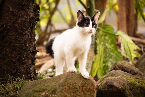 Immagine gratuita di ajiwandi, albero, alla ricerca, animale