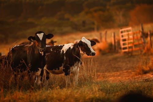 Immagine gratuita di agricoltura, alba, ambiente