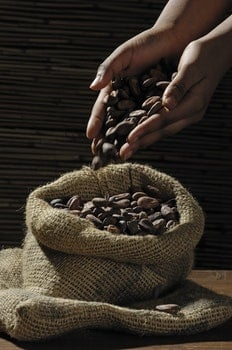 Coffee Bean on Human Hands and Sack