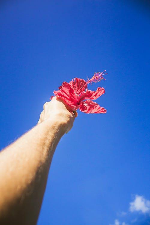 Gratis lagerfoto af arm, blå, blå himmel, blomst