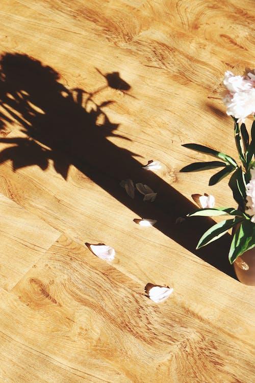 Photos gratuites de arbre, bois, bûche, charpenterie